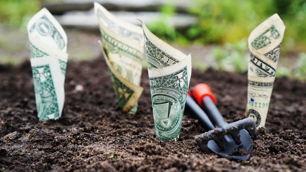 dollar bills in soil