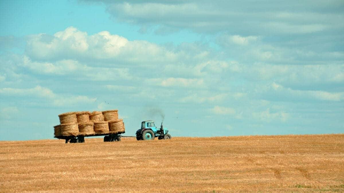 Tax-Loss-Harvesting