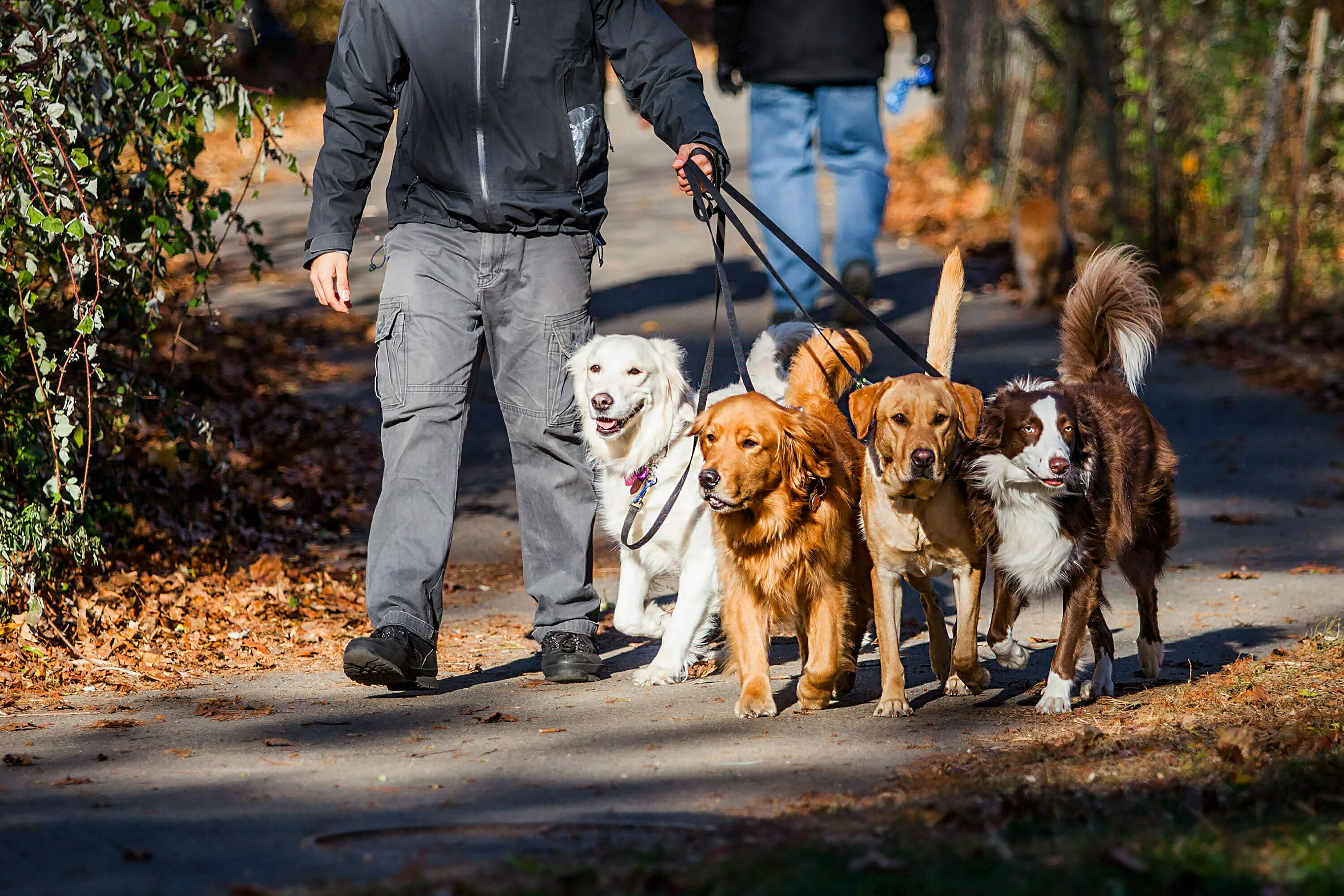 ways to make money walking dogs