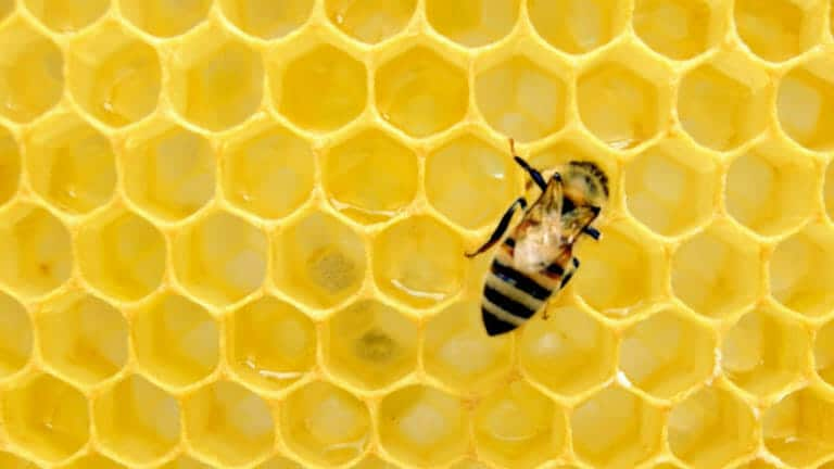 Honey Review: Save On Everything You Buy Online With Honey