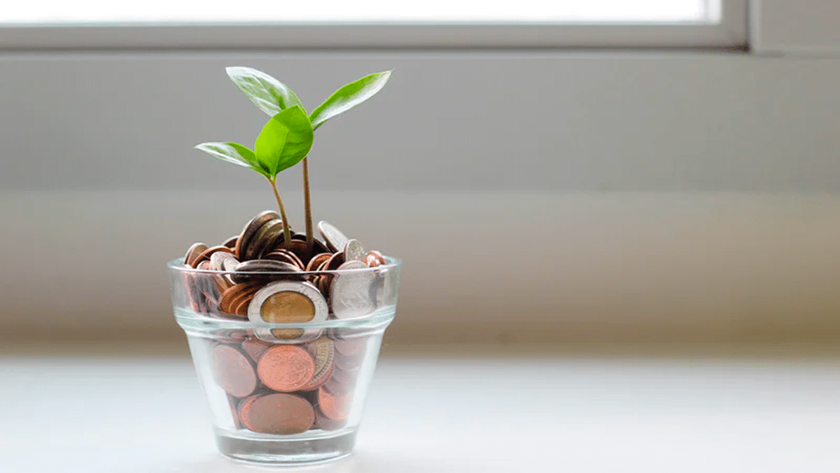plant in piggy bank
